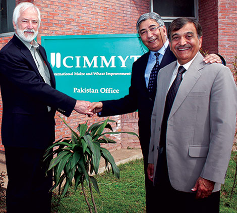 cimmyt-office-reopening-pakistan