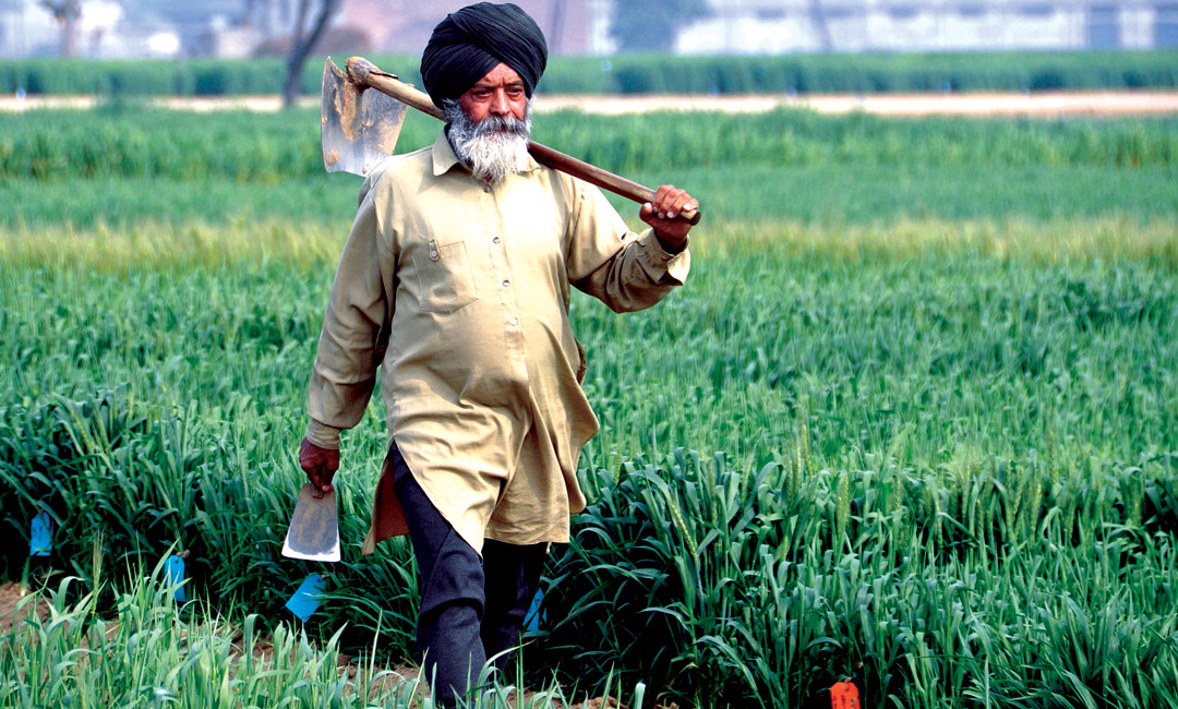 the underutilized labor from agriculture of south asians Overview of the south asian diaspora the indentured labor system in canada most south asian immigrants worked in the sawmill industry rather than in agriculture.